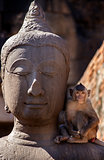 Crab eating macaque on Buddha statue
