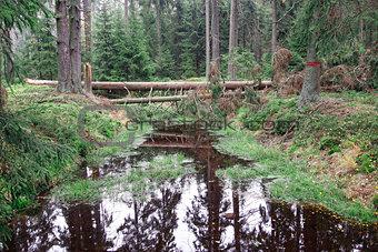 Forests in peat bogs Kladska