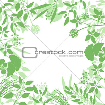 Green square background with collection of plants. Silhouette of herbs branches isolated on white background