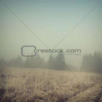 background-50
