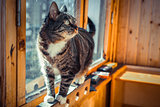 Pretty male domestic cat in a home setting on the balcony window