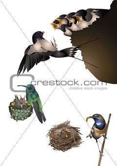 Amazing birds set - young birds