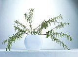 willow twigs in a vase