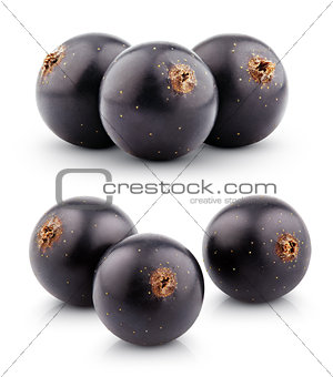 Black currant berry on white
