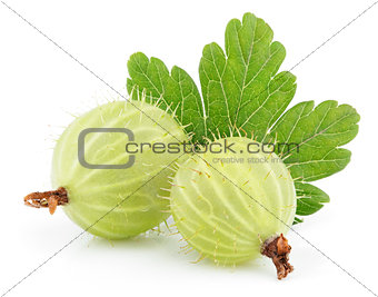 Green gooseberry with leaf on white