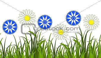 daisies and cornflowers border