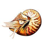 Sea Shrimp Illustration