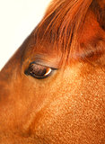 macro photo of a horse
