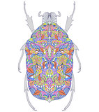 colorful beetle on white background.