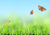 Green grass, caterpillar and butterfly