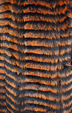 Fur is painted orange and black stripes