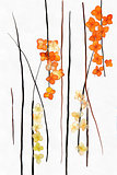 drawing bouquet of dried, desiccated, pressed leaves of plants c