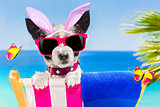 vacation easter dog