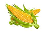 Corn vector illustration eps10 isolated white background