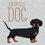 Vector Dogs Collection