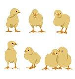 Set of chickens
