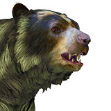 Arctodus Bear Head