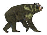 Arctodus Bear Side Profile