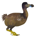 Dodo Bird Side Profile