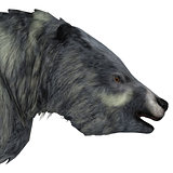 Eremotherium Sloth Head
