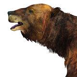 Megatherium Sloth Head