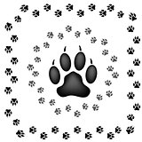Animal Prints Icons