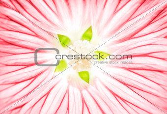 Beautiful pink flower background