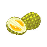 Durian Flat Vector Sticker