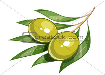 Pair of green olive vector illustration eps10