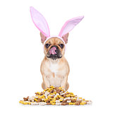 easter bunny hungry dog