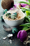Easter composition with tulips and nest