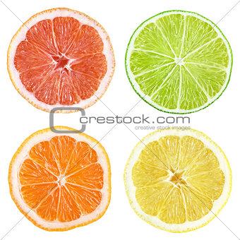 Slices of grapefruit, lime, lemon, orange