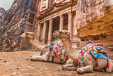 Bedouin camel rests near the treasury Al Khazneh