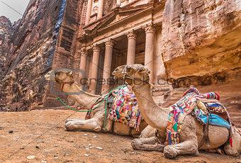 Bedouin camel rests near the treasury Al Khazneh