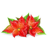 Vector Christmas flower on a white background