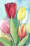 Vector illustration of tulips. Watercolor floral illustration.