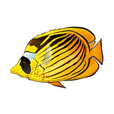 Butterfly fish Illustration
