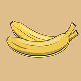 Bananas in vintage style. Colored vector illustration