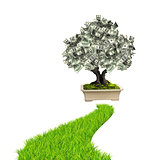Money tree with dollar banknotes and road with green grass