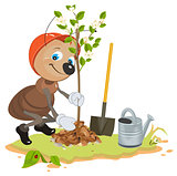 Ant Gardener planting tree. Seedling fruit tree. Apple tree sapling