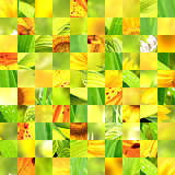 Seamless background with sunflower patterns