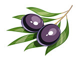 Pair of black olive vector illustration eps10