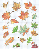 et of autumn leaves, chestnuts, acorns and viburnum on a background of notebook sheet in a cage