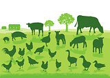 Organic Agriculture with Farm Animals