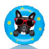 dog sunbathing with  air mattress in summer