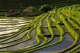 Green Terraced Rice Field in Bali, Indonesia