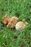 three rabbits landing on grass