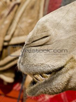 Camel nose