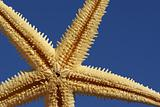 close up of starfish