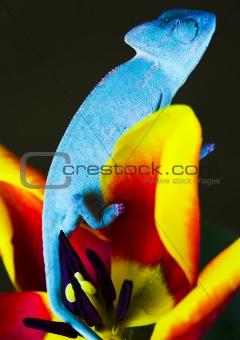 Chameleon on the tulip
